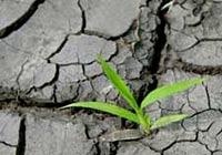 Justicia Ambiental y protección de la Madre Tierra